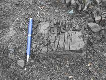 Figure 5. Weathering block of serpentinite in a recent debris flow deposit