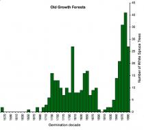 Histogram of old growth white spruce ages