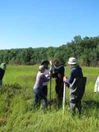 Students driving a Livingstone corer into Sundew bog, Allegan County.