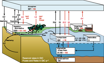 IPCC carbon cycle