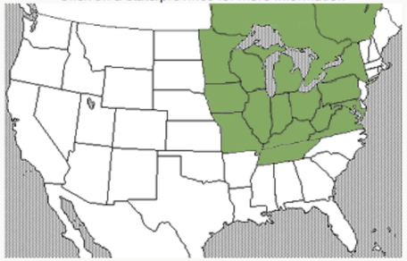 May, 2012 map of emerald ash borer location in U.S.