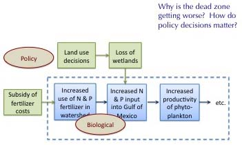 Logic Diagram of how policy decisions impact the Dead Zone