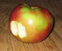 photo of apple with bite missing