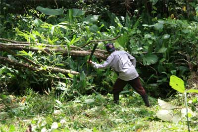 clearing rainforest with Machete