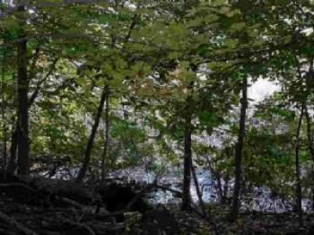Image of Wooded Wetland