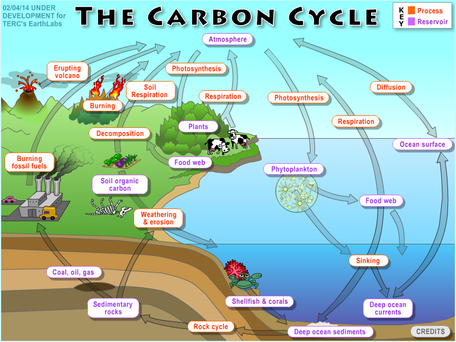 carbon cycle interactive png