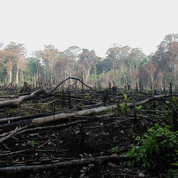 deforestation lab Brazil's well-documented reduction in deforestation was offset by increasing  forest loss in indonesia, malaysia, paraguay, bolivia, zambia,.