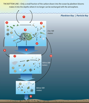Biological Carbon Pump:WHOI