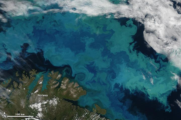 Phytoplankton bloom, Bering Straight  Norway