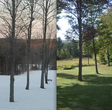 Winter-Summer