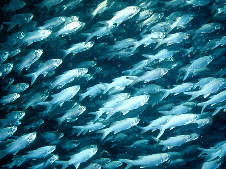 Lab 1 plenty of fish in the sea for Plunty of fish