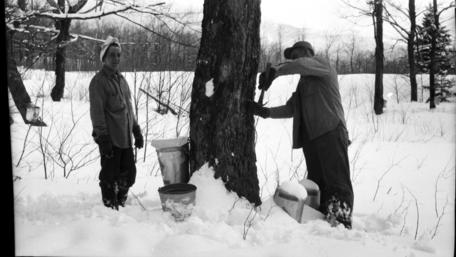 tapping a tree 1952 Vermont