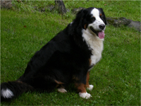 Image of a dog
