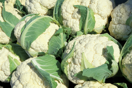 Photopage cauliflower image