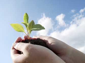 A student holding a seedling plant