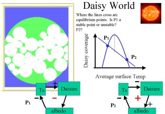 Daisy World Explanation 3 of 3