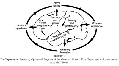 Zull Regions of Cerebral Cortex