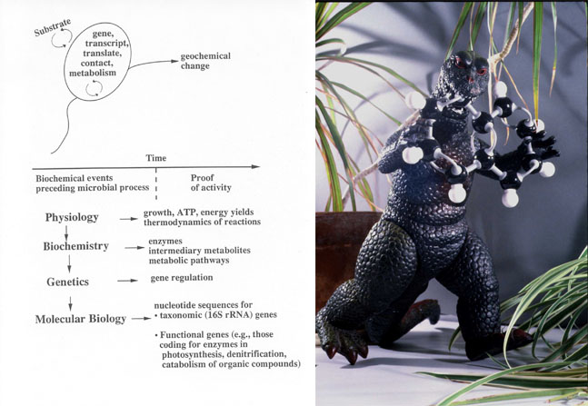 Diagram conceptually depicting microorganisms and their biogeochemical impact, and Godzilla.
