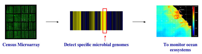 Diagram depicting the use of a DNA microarray.