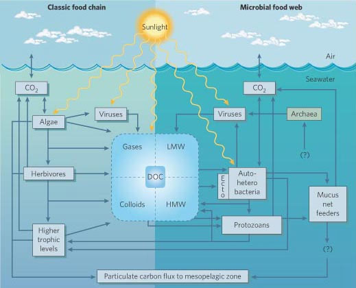 Marine microbial interactions in the upper ocean.