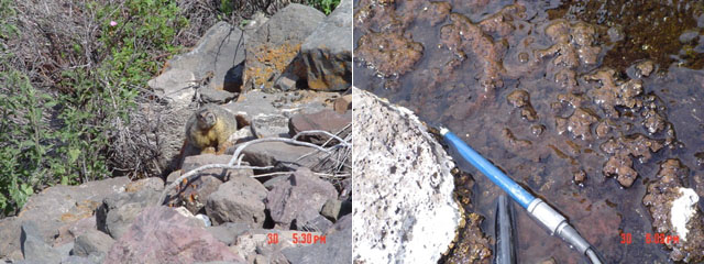 Images of a varmit near Eaglevill hot springs and of the springs themselvs