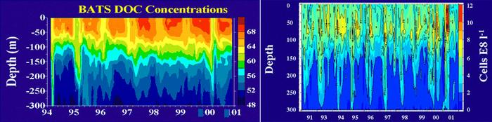 Graphs of DOC concentrations and cell abundance relative to depth
