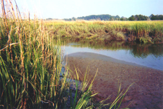 Image of sediments sampling site at Dean Creek.