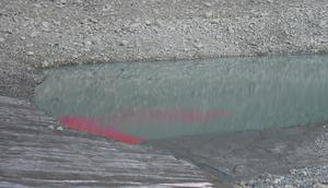 Rhodamine dye shows water flow path in the lake.