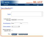Image of the Mega BLAST front page in NCBI