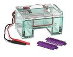 Gel Box used for electrophoresing DNA.
