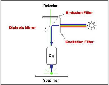 Diagram of the filters in a fluorescent microscope.