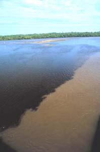 Mississippi River Dead Zone