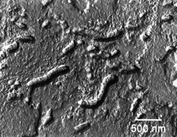 High resolution TEM image of nanofossils in ALH84001