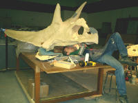 Museum of the Rockies scientist in the mouth of a Torosaurus skull model.