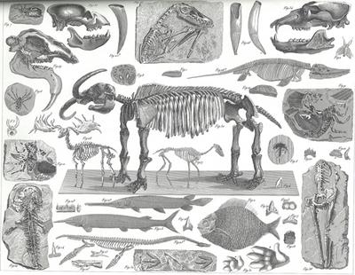 Figure of fossils from 1837 for Paleo Page