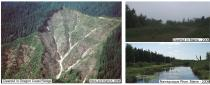 Figure 1. Clearcuts in Oregon Coast Range