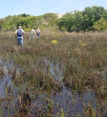 Interdune marsh, False Cape St Pk VA