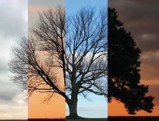 A tree through time