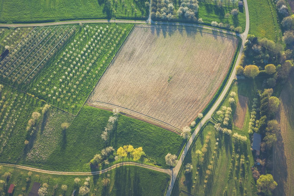 farm_frances-gunn-QcBAZ7VREHQ-unsplash.jpg