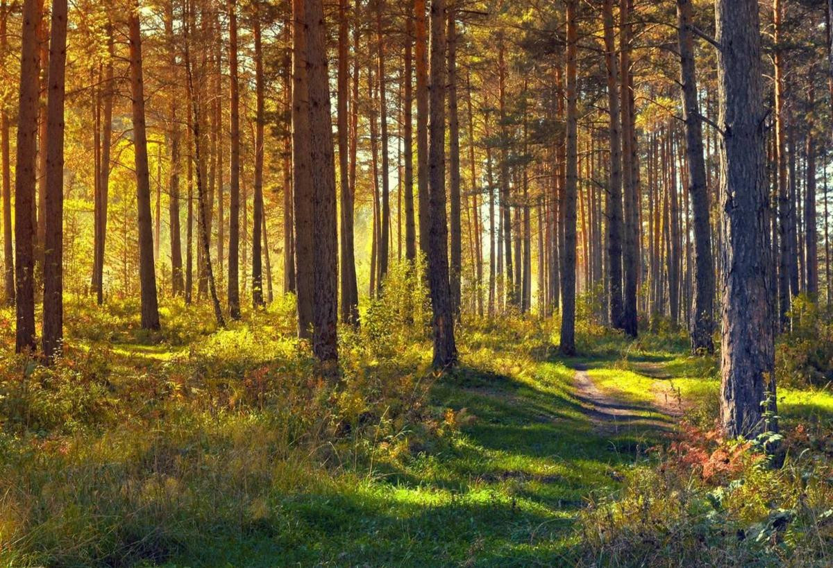 forest_imat-bagja-gumilar-jwTvCQQJXh0-unsplash.jpg
