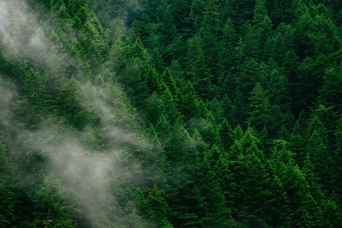 forest_raphael-menesclou-Y8O_3xuz_H0-unsplash.jpg