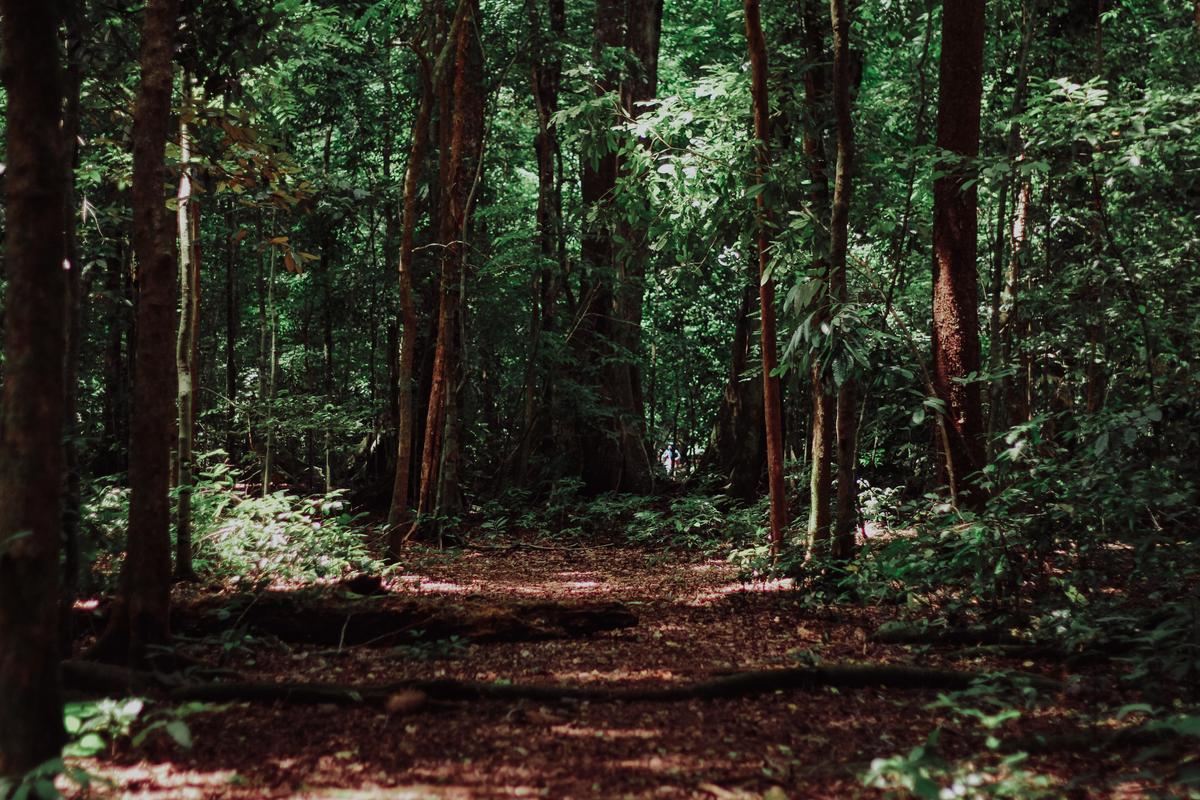 forest_sergei-akulich--heLWtuAN3c-unsplash.jpg
