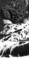 Carol Mankiewicz's icebreaker image