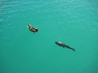Lake Mead aquatic life
