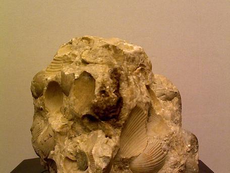 Brach Cementstone Original Specimen Image