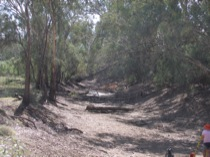 Macquarie River Channel, Fig. 4.