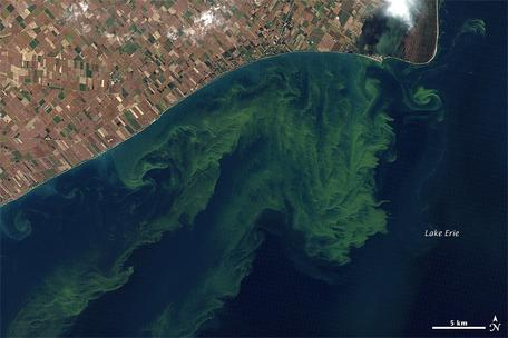 Algal Bloom in Lake Erie