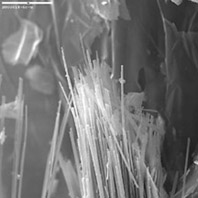 Asbestiform