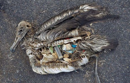 Bird Filled with Plastic
