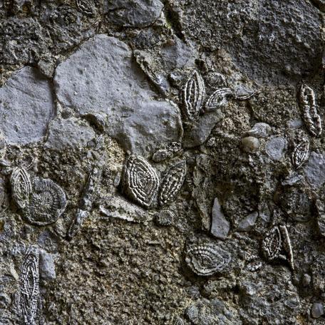 Nummulitic Limestone